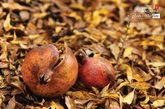The Fruit of Love, by Bawar Mohammad Pomegranates, Award Winner, Love, Fruit, Amor, Grenades, Pomegranate, El Amor