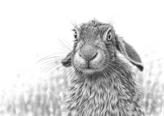Rabbits are amazing creatures, I have painted a number of pictures of them including a couple of zentangle rabbits. Until my family and I adopted a rabbit I had no idea just how intelligent these a…