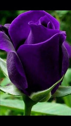 Purple flowers are a great way to add interest to your yard or landscape. See some of our favorite purple garden flowers! #Purple flowers #purple flowers names #purple wedding flowers #wedding