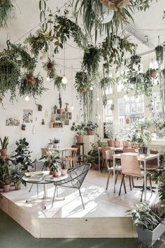 Funky way to have lots of plants. Also love the natural lighting