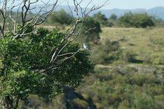 Te gusta #Cordoba ? buscas paz,naturaleza,aire puro, mejor calidad de vida? vení a visitarnos!!