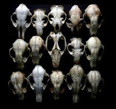 Perfectly intact skulls