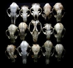 Perfectly intact skulls