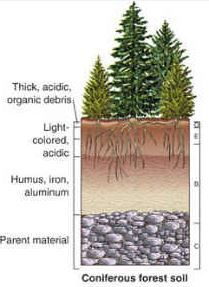 forest soil - Google Search
