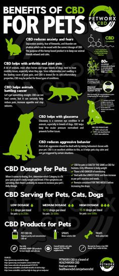 Amazing infographic for CBD and Pets info. #weightlossjourney #depression #yoga #medicinalmarijuana #cbdoil #cbdisolate #cbdlife #mmj #hemp #thc #cannabiscommunity
