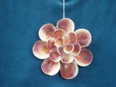 Sea Shell Floret Ornament / Sun Catcher by judystephenson on Etsy, $14.00