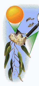 http://www.gould.edu.au/foodwebs/kids_web.htm