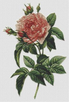 Counted Cross Stitch PATTERN Rosa Gallica by TheArtofCrossStitch, $8.99