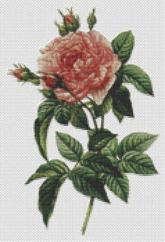 Counted Cross Stitch PATTERN Rosa Gallica by TheArtofCrossStitch, $8.99