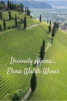 Discover the tantalizing, elegant wines of Elena Walch in Alto Adige, Italy