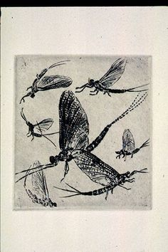 Mayflies Original Etching, Limited Edition CXII/CL 11 x 11 inches, framed size black frame
