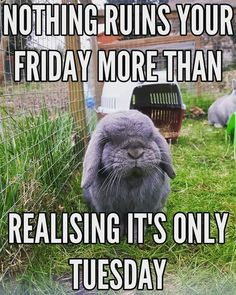 "These ""Top 26 Work Memes Tuesday"" are so funny. If you read out these ""Top 26 Work Memes Tuesday"" on Tuesday then you read it at right time. Funny Animal Memes, Animal Quotes, Funny Animal Pictures, Funny Animals, Cute Animals, Pet Memes, Pictures Images, Funny Images, Funny Easter Memes"