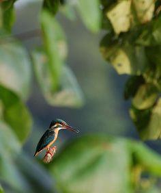 Amazing hummingbird photo!