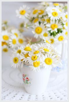 A Cup Of Dasies