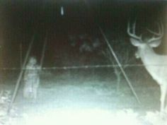 Supposed picture of a ghost captured by a trap camera near a deer feeder.