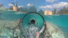Dolphin Plunge Body Slide Both Slides (HD POVS) Aquatica Seaworld Water ...