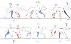 """ KEY TO KEYFRAMES "": Dog Walk Poses"