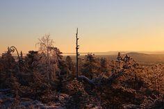 Aamulla noin -17 astetta. Isorakka, Ounasvaara. Näkymä Kurivaaraan ja Sierijärvelle päin. Ounasvaara on lajinsa viimeinen, viimeinen mohikaani. | November 11, 2016 | Photo: Juhani Valli, Rovaniemi