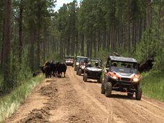 South Dakota Vacation, South Dakota Travel, Atv Riding, Trail Riding, Deadwood South Dakota, Best Atv, Jeep Trails, Tornados, Storm Clouds