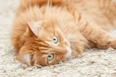 L'astuce imparable pour nettoyer un pipi de chat sur le tapis ou la moquette