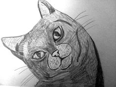 My cat drawing by me (Jade Hurdle)