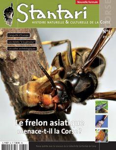 Stantari #32 : Le frelon asiatique menace-t-il la Corse ?