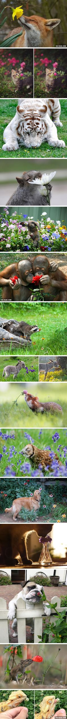 Animals Sniffing Flowers Is The Cutest Thing Ever http://9gag.com/gag/aYeLwQ2?ref=fbp