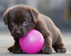 .Adorable puppy