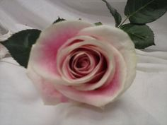 Offering services: Leslie Reyes's Wedding             Saturday of April 162016 San Diego Wedding / Event Vendors Penn Bryan