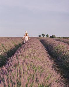 "5,321 Likes, 66 Comments - Julia Engel (Gal Meets Glam) (@juliahengel) on Instagram: ""The lavender fields of Valensole, the turquoise waters of Gorges du Verdon and visiting the village…"""