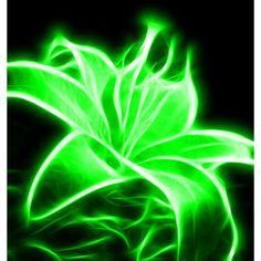 Ideas For Fruit Garden Photography Nature Dark Green Aesthetic, Aesthetic Colors, Neon Green, Green Colors, Green Pictures, Slytherin Aesthetic, Green Photo, Green Wallpaper, Fruit Garden