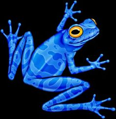 ♥ Blue Poison Dart Frog Tattoo That I Want. | Tatoos