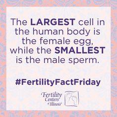 #FertilityFactFriday