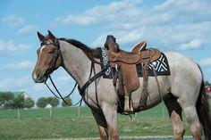 Synergy™ Contoured EVA Sport Foam Saddle Pad – Orthopedic Felt Liner Western Saddle Pads, Tack, Contour, Felt, Horses, Sport, Cool Stuff, Detail, Animals