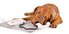 Bildresultat för hundar som jobbar