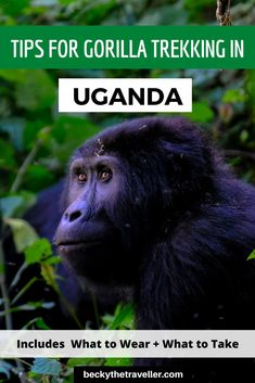 Is gorilla trekking in Uganda on your bucket list? Read about my experience gorilla trekking in Bwindi Impenetrable National Park in Uganda. I share my experience and give you some top tips for the trek. Uganda Travel, Africa Travel, Ireland Travel, Galway Ireland, Cork Ireland, Ireland Vacation, Gorilla Trekking, Animal Experiences, Adventure Activities