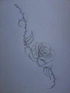 Rose and thorn covered vine drawing