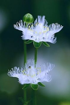 followthewestwind:  (via Flowers…..❤)