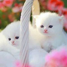 ❤️ The Pet's Planet: Cute Cats
