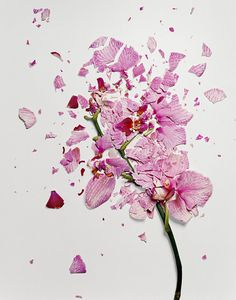 Photos of Shattered Flowers by Jon Shireman