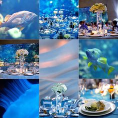 The Aquarium Wedding Of David Gabby Who Are Both Marine
