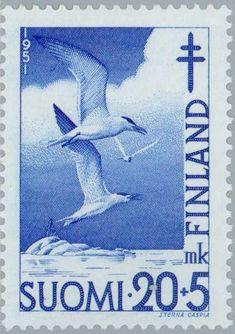 Stamp: Caspian Tern (Hydroprogne caspia) (Finland) (Fight against TBC) Mi:FI 405