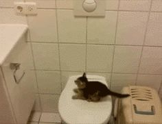 """""""If my big brother can do it so can… I."""" 