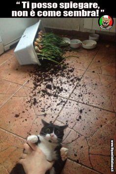 gatto non è come sembra vignetta