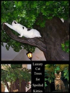 ♥Luxury Cat Trees for Spoiled Rotten Kitties♥ Please visit us at www.aHiddenHollow.com