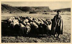 1943 Sheep Vit Valley Shepherd Vid River Bulgaria Utus