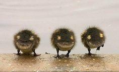:)) ducklings
