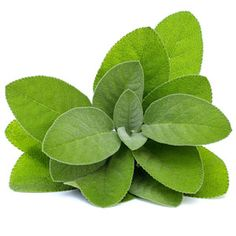 Sage Class will teach you all about sage and it's uses in cosmetics, bath and body products, and incense.