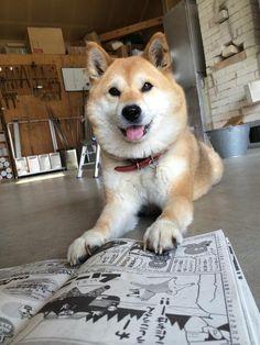 """Muco reads his manga, """"Muco""""!"""