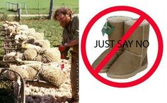 It takes two sheep to make one pair of Ugg boots